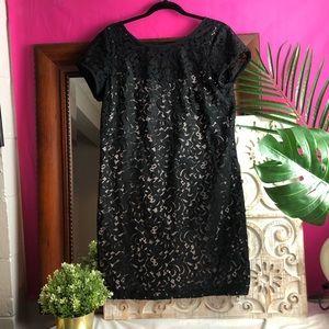 Like new ANN TAYLOR LOFT LACE DRESS SZ 12